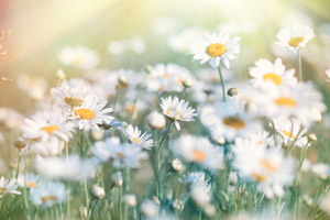 consulenza naturopatica torino benessere fisico e mentale